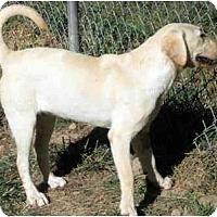 Adopt A Pet :: Sunny - Harrisburg, PA