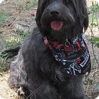 Adopt A Pet :: Mollie - Torrance, CA