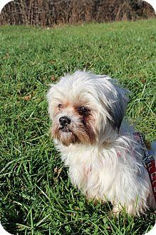 Shih Tzu Mix Dog for adoption in Waldorf, Maryland - Jade