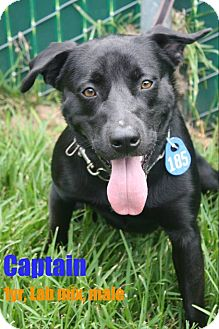 Labrador Retriever Mix Dog for adoption in Beaumont, Texas - Captain