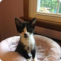 Adopt A Pet :: Jerry - Jackson, NJ