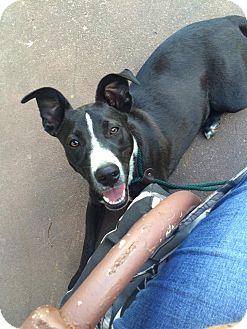 Border Collie Mix Dog for adoption in WAGONER, Oklahoma - Guinn
