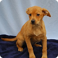 Adopt A Pet :: Miami - East Sparta, OH
