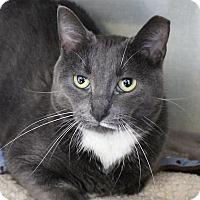Adopt A Pet :: Dessa Darling - Chicago, IL