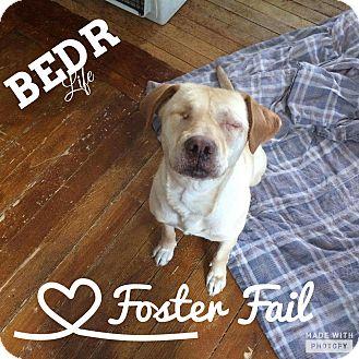 Labrador Retriever Mix Dog for adoption in Regina, Saskatchewan - Quinn