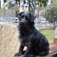 Adopt A Pet :: Pepe - Mountain Center, CA