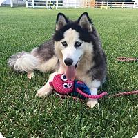 Adopt A Pet :: Kai - Boca Raton, FL