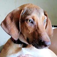 Adopt A Pet :: Suki - Princeton, NJ