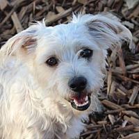 Adopt A Pet :: SCRUFFY - Red Bluff, CA