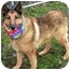 Photo 2 - Collie/Shepherd (Unknown Type) Mix Dog for adoption in Cincinnati, Ohio - Austin