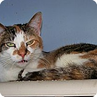 Adopt A Pet :: Cleo - Dover, OH