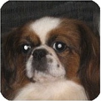Adopt A Pet :: Rodger-PA - Emmaus, PA