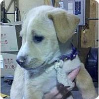 Adopt A Pet :: Honey - Palmyra, WI