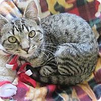 Adopt A Pet :: Pauley - Mobile, AL
