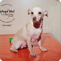 Adopt A Pet :: Amstel - Shawnee Mission, KS
