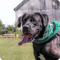 Adopt A Pet :: Neville - Lewisville, IN