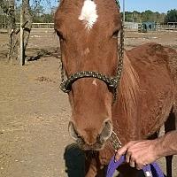 Adopt A Pet :: Pia - Hitchcock, TX