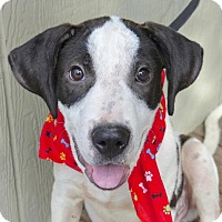Adopt A Pet :: Sully - Baton Rouge, LA