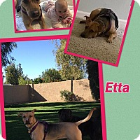 Adopt A Pet :: Etta - Scottsdale, AZ