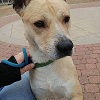 Adopt A Pet :: Tanner - Wichita, KS
