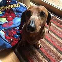 Adopt A Pet :: Duke - West Bloomfield, MI