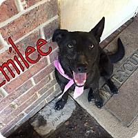 Adopt A Pet :: Emilee - Byhalia, MS