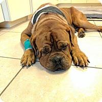 Adopt A Pet :: Brutus - Lithia, FL