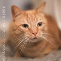 Adopt A Pet :: Alonso - Windsor, ON