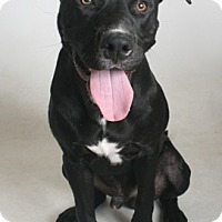 Adopt A Pet :: Pet Photo - Redding, CA