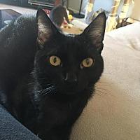 Adopt A Pet :: Ramona (teenage girl) - Harrisburg, PA