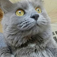Adopt A Pet :: Sassy - Jacksonville, FL