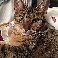 Adopt A Pet :: Kate - Millersville, MD