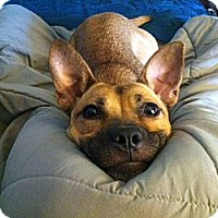 Adopt A Pet :: Charlotte - Los Angeles, CA