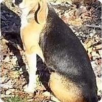 Adopt A Pet :: Wanda - Plainfield, CT