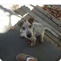 Adopt A Pet :: Clyde - Conway, AR