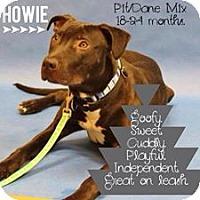 Adopt A Pet :: Howie - Fenton, MI