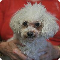 Adopt A Pet :: Coco - Canoga Park, CA