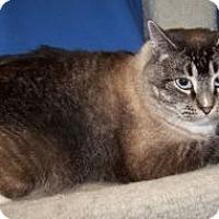 Adopt A Pet :: Gabriel - Colorado Springs, CO