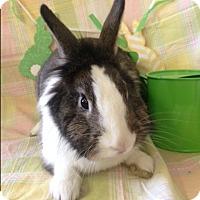 Adopt A Pet :: Piper - Paramount, CA
