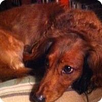 Adopt A Pet :: Brutus - Jacobus, PA