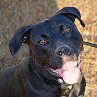 Labrador Retriever Mix Dog for adoption in Portsmouth, New Hampshire - Gypsy
