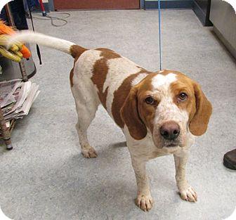 Basset Hound Mix Dog for adoption in Warrenton, North Carolina - Roscoe