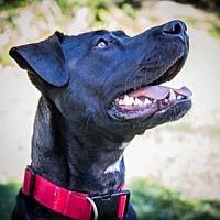 Adopt A Pet :: Mack - Allentown, PA