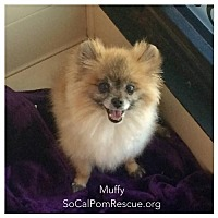 Adopt A Pet :: Muffy - Irvine, CA