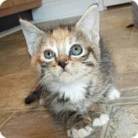 Adopt A Pet :: Gloria - Snow Hill, NC