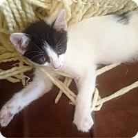 Adopt A Pet :: Zorro - Orange, CA