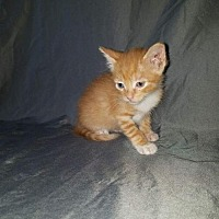 Adopt A Pet :: Peaunut - ROSENBERG, TX