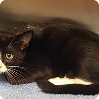 Adopt A Pet :: Floyd - Americus, GA