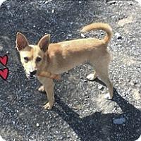 Adopt A Pet :: Finnick - Albemarle, NC
