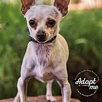 Adopt A Pet :: SPIKE - Inland Empire, CA